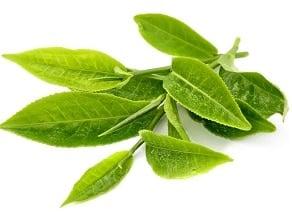 konjac cu ceai verde